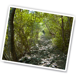 Brown Bay Trail on St John, USVI