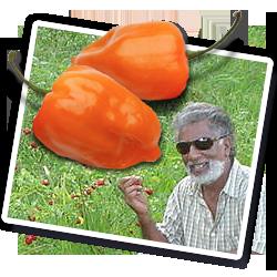 Trinidad Charlie hot sauce St John