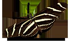 Butterfly in the Virgin Islands National Park on St John