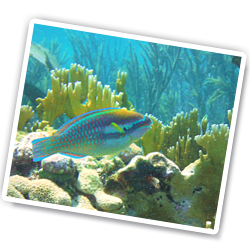 Snorkeling Henley Cay