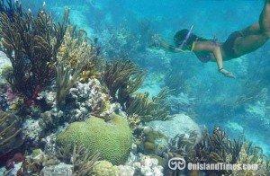 Henley Cay snorkeling