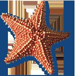 Cushion Starfish at Waterlemon Cay