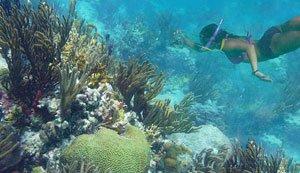 Henley Cay snorkeling in St John Virgin Islands