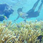 Snorkeling on St John US Virgin Islands